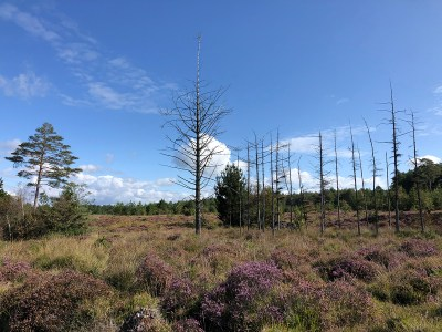 Splodz Blogz | Dorset Heathland