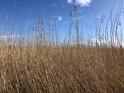 Splodz Blogz | Newport Wetlands