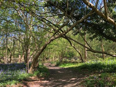 Splodz Blogz | Queen's Wood, Southam