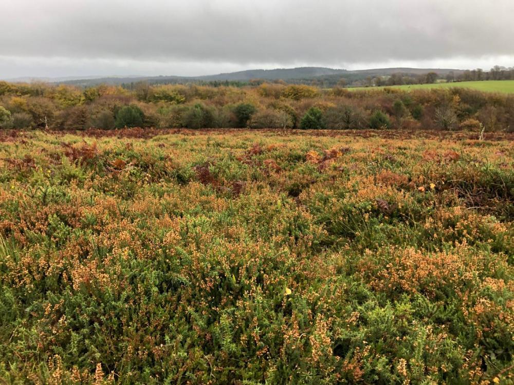 Splodz Blogz | Hiking in the Quantock Hills AONB
