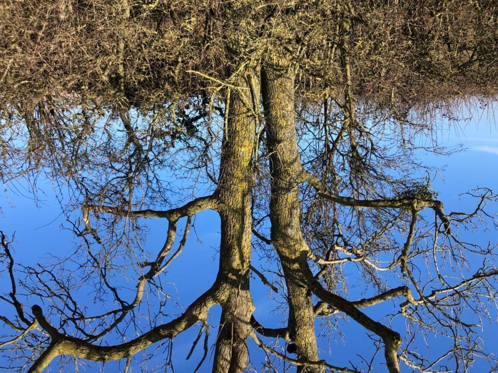 Splodz Blogz | Tree on Local Walk