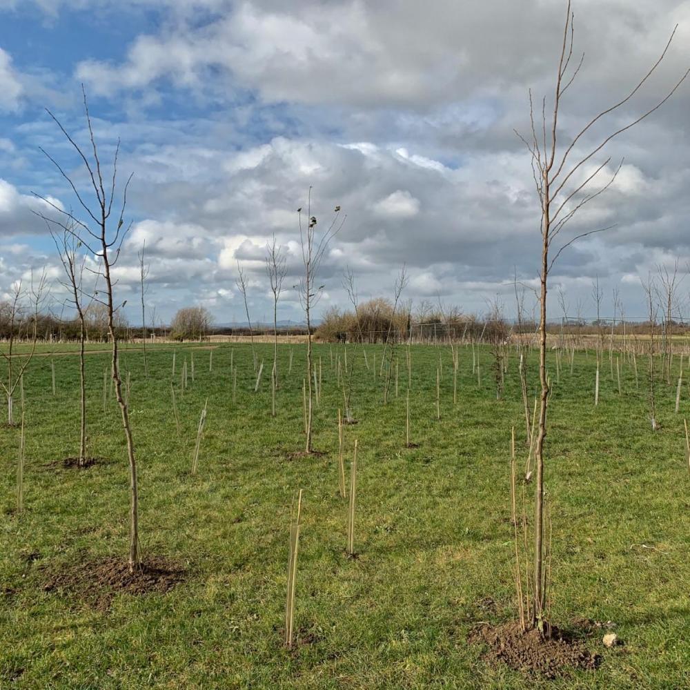 Splodz Blogz | SplodzDPC Day 10 - Wood for the Trees