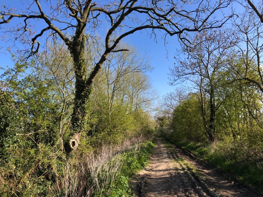 Splodz Blogz | A Lane on the Winchcombe Way