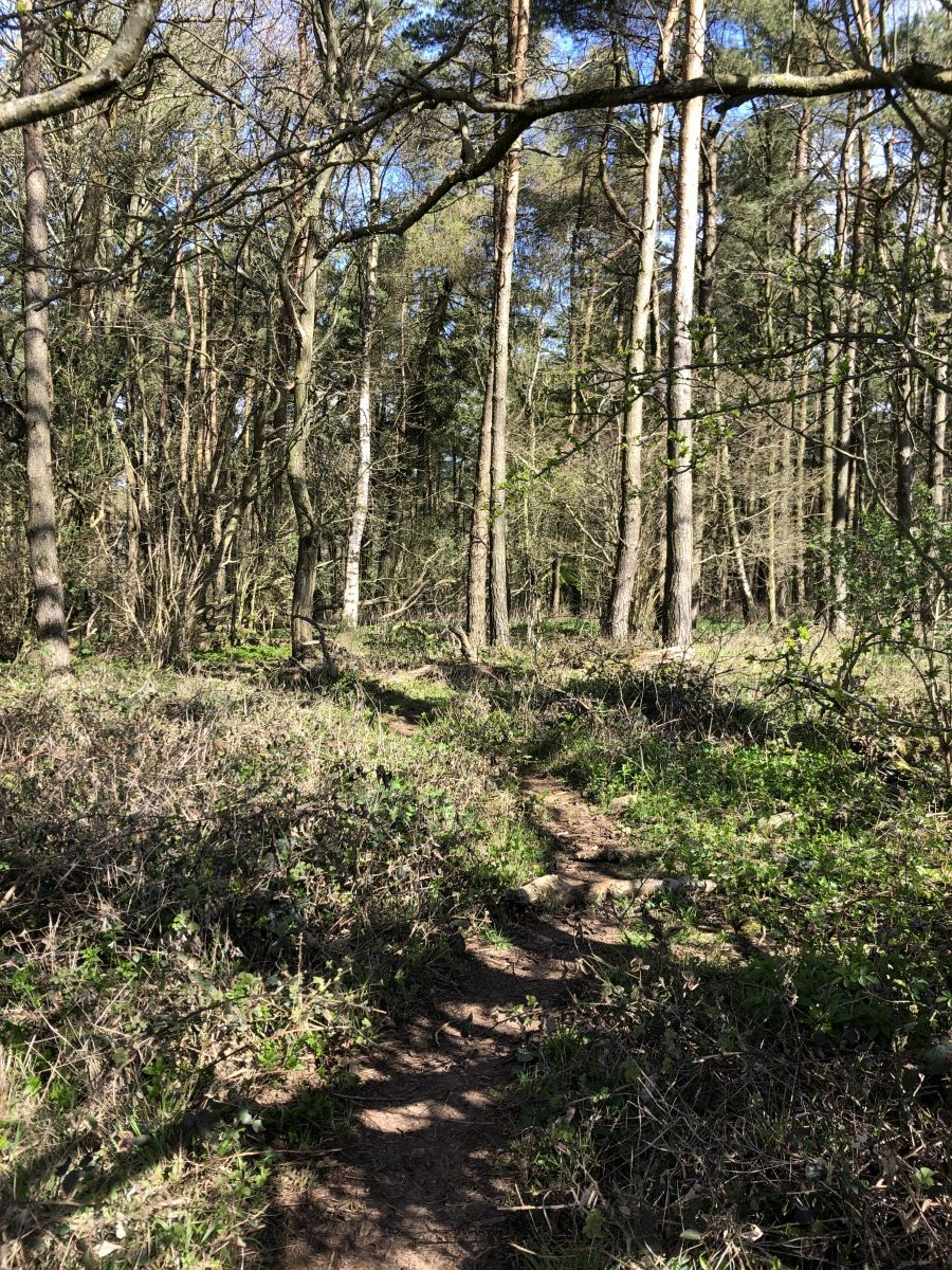 Splodz Blogz | Breakheart Plantation