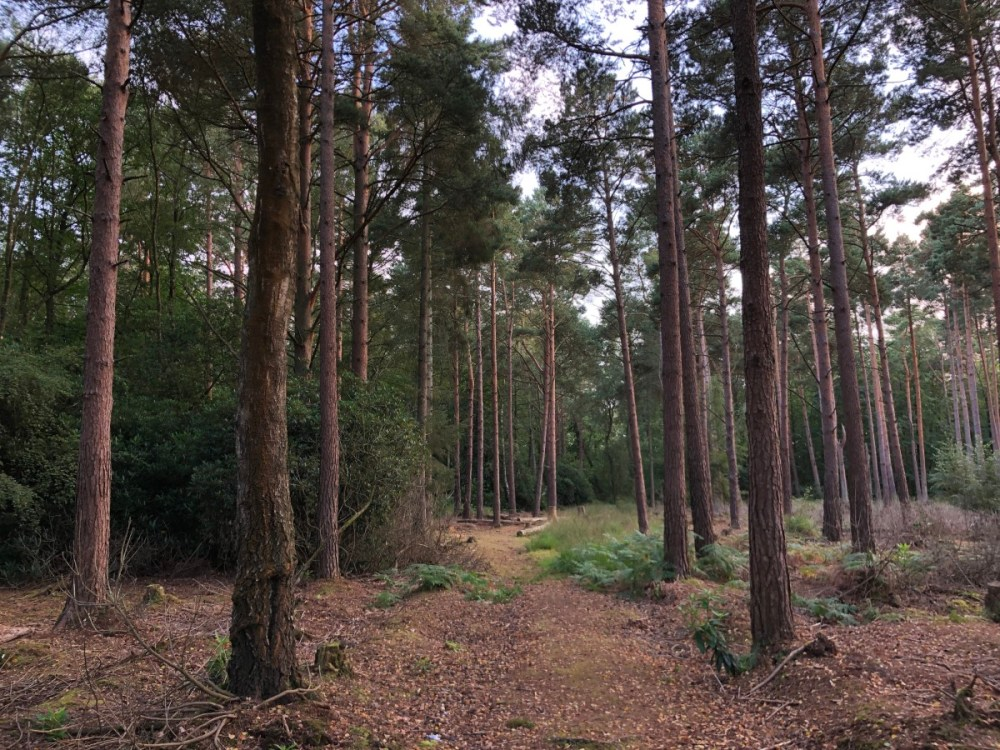 Splodz Blogz   Woodland Path at Comms Unplugged