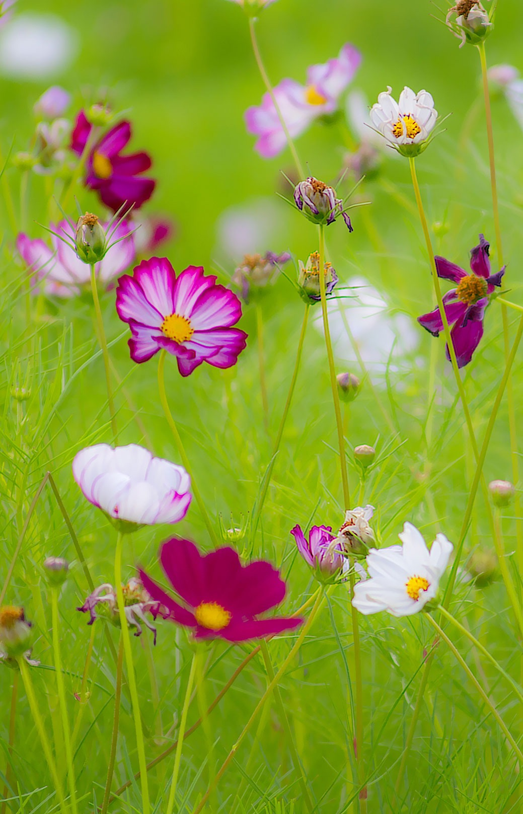 Free Photo of the Day – Summer Wildflowers