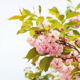 Spring at Museum San