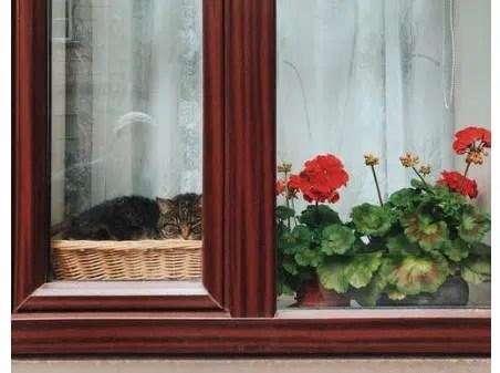 wooden window frames, window frames