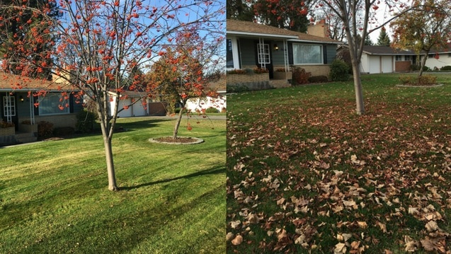Before and after leaf removal service