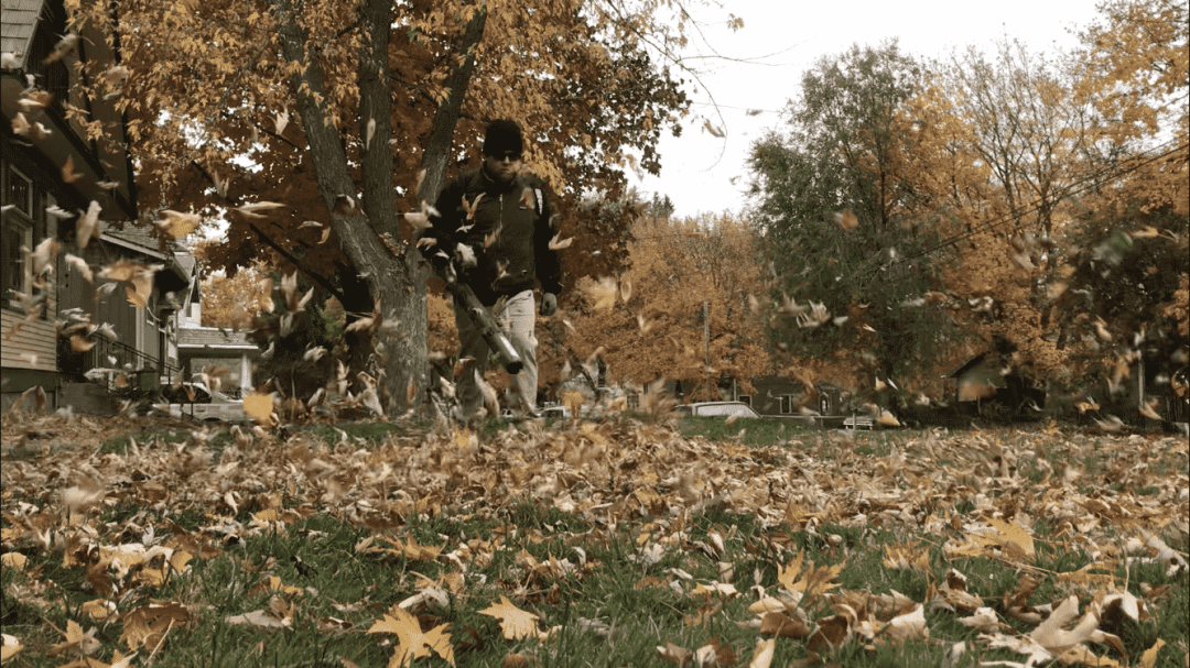 Fall Clean Up 1