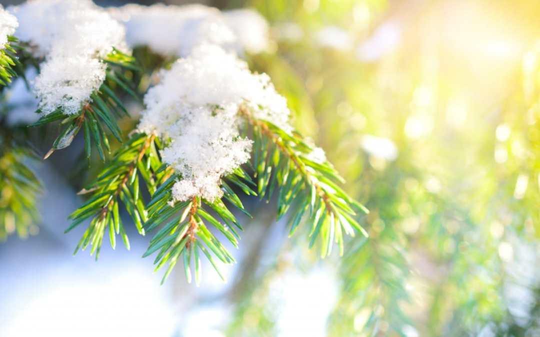 Spokane's Finest Lawns Winter Plant Care