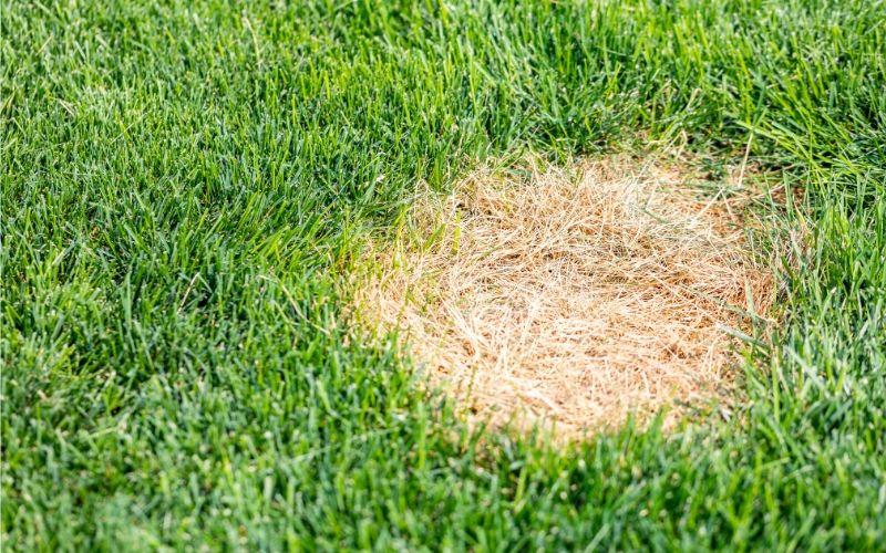 Dead Spot in Lawn