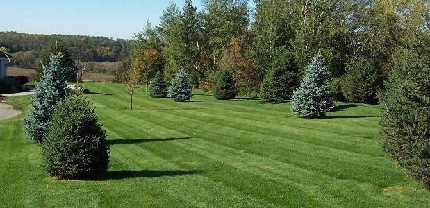 A very large Spokane property with recently mowed grass and pruned trees. There are visible mowing stripes in the green grass.