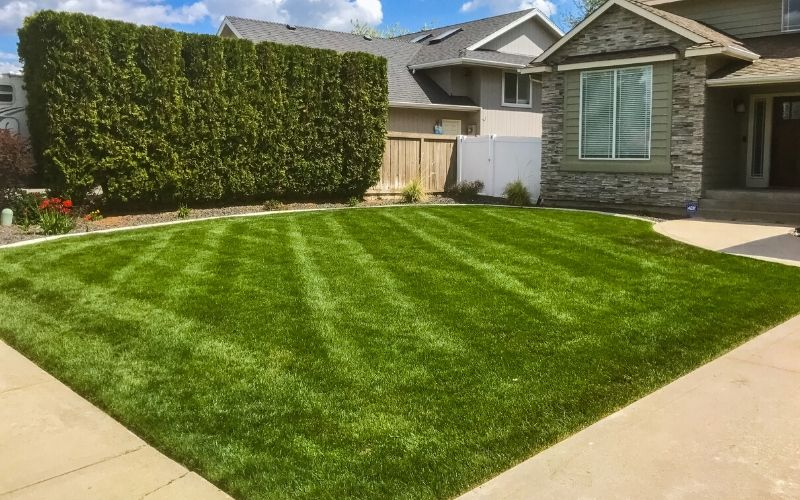 A recently mowed lawn lined with professionally pruned hedges.