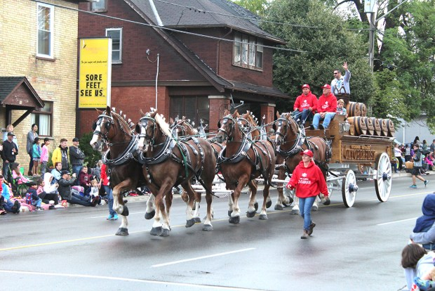 Six horses pull a traditional wagon full of kegs.