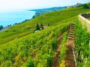 Schweiz Genferseegebiet Lavaux 1
