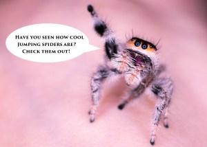 Spoodernest logo, jumping spider buy uk
