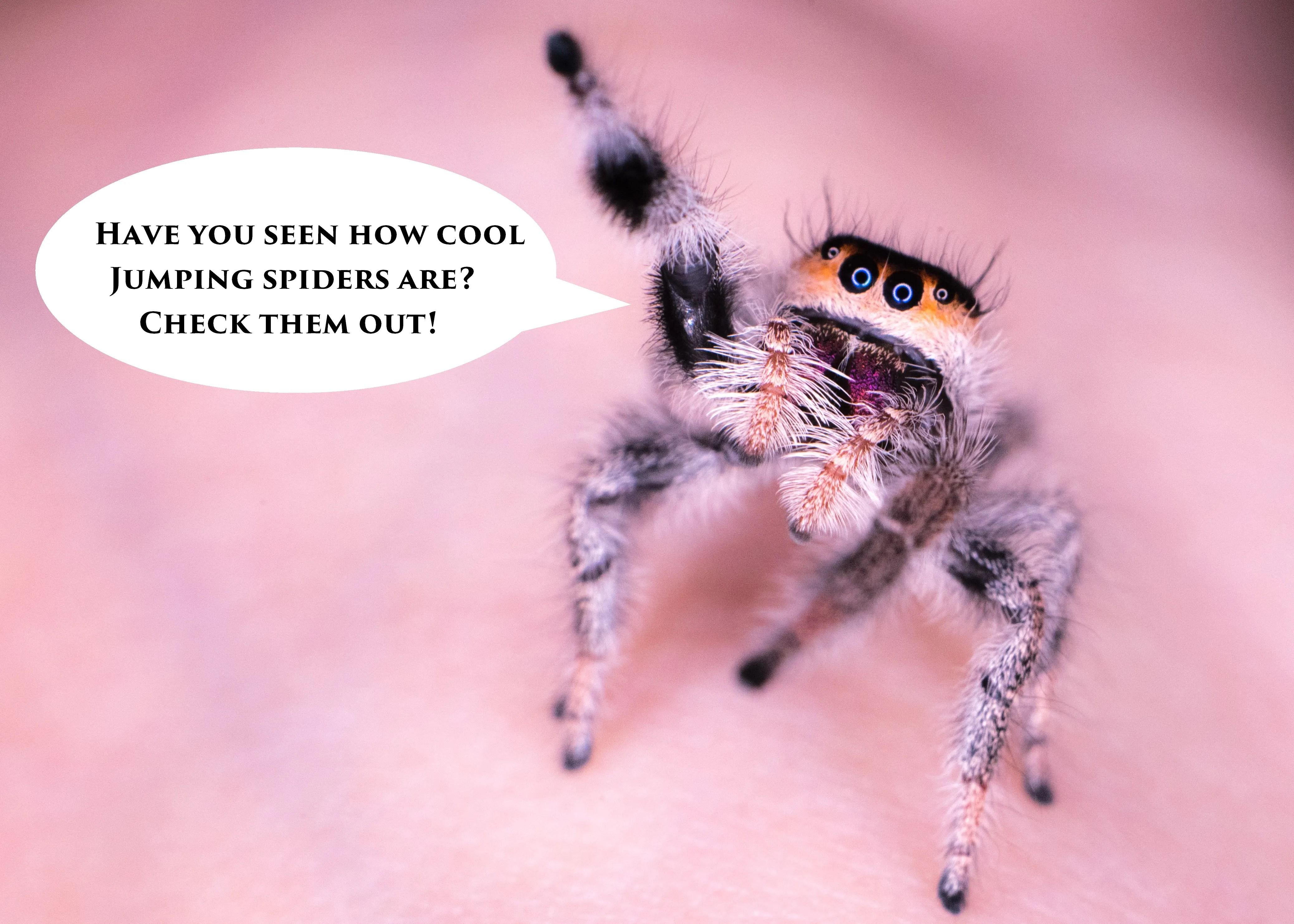 Handling Your Jumping Spider Spooder Nest