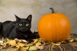 black cat safety during Halloween