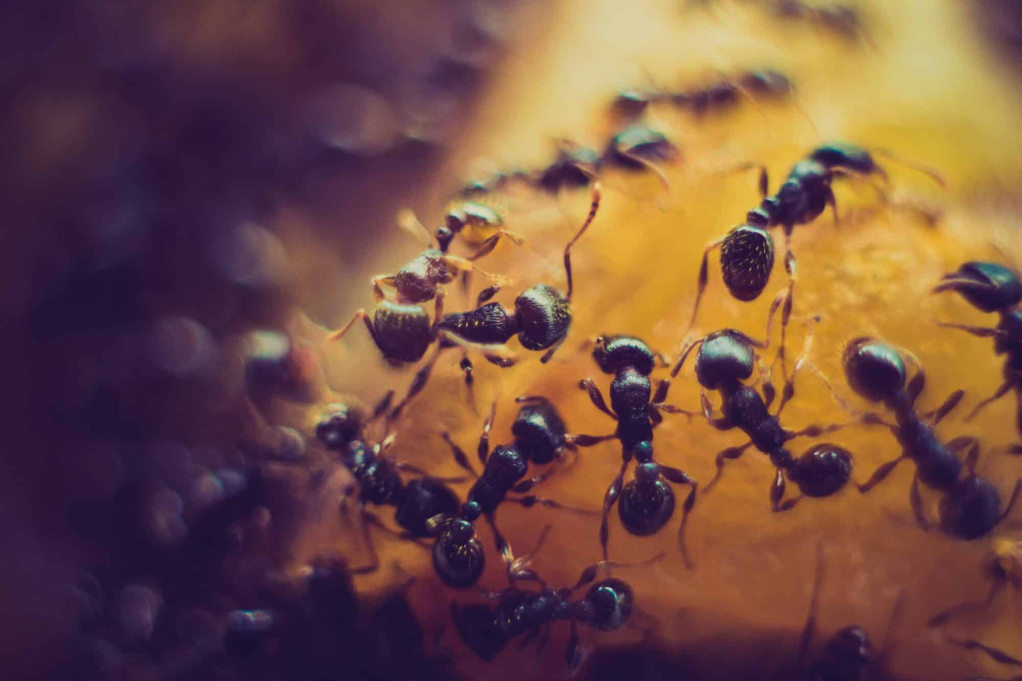 Photo of ants from Unsplash
