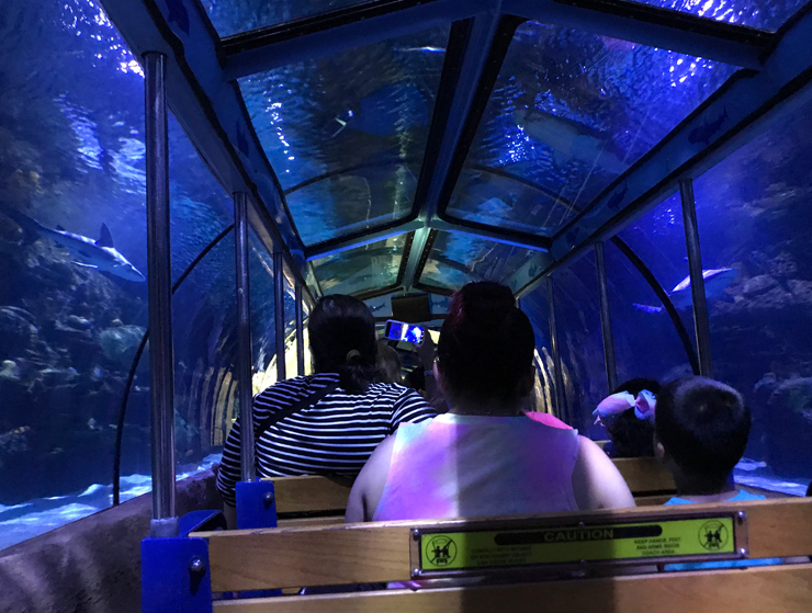 Downtown Aquarium train shark voyage Houston