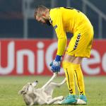 بالفيديو.. كلب يوقف مباراة في الدوري الأوروبي!