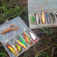 The lure of lure fishing for haruan (C. Striata)