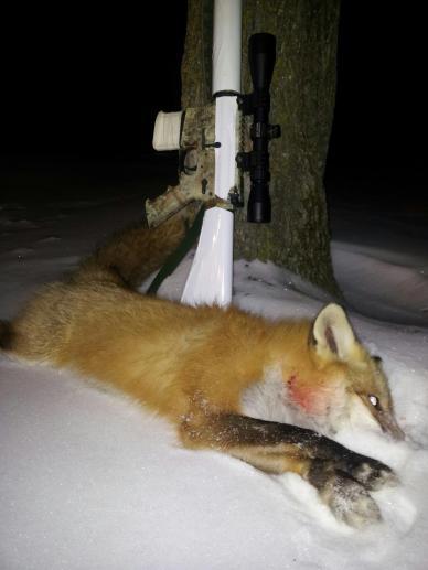 Corey Loeffler's fox