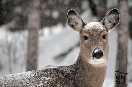 snowy deer mnsj