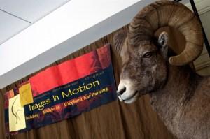 32313 - sheep mount