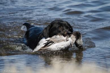 42913 - ellie snow goose ret water 2
