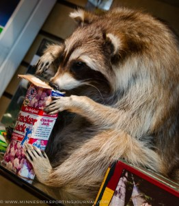 Don't let this raccoon near your crackerjacks!  @ Smokey Hills Outdoor Store