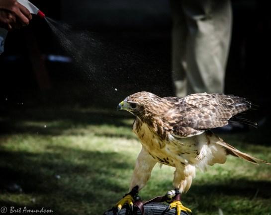 81613 - hawk spray 2