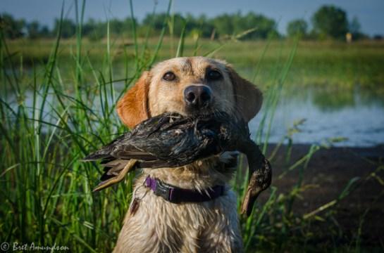 9713 - youth waterfowl ducks-4