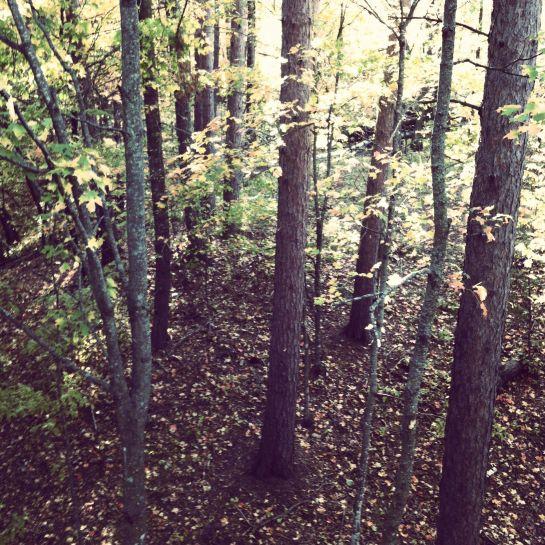 Trees MNSJ BLog