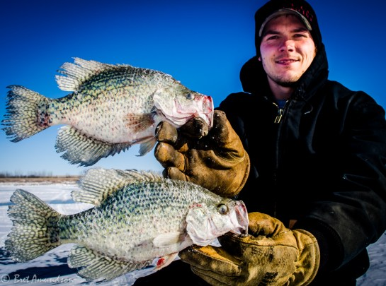 "Tony Crotty with a couple 12"" crappies"