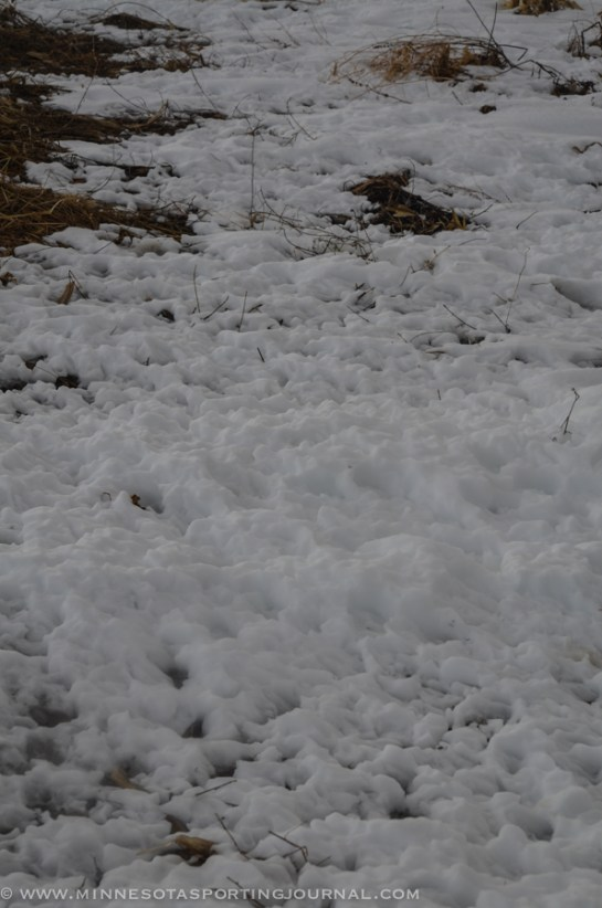 31914 - sd snow geese ducks mallards pintails-69