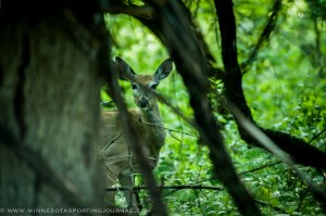 6514 - deer doe-3