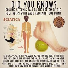 Do you know this? The tennis ball presses and treats trigger points in the piriformis muscle, reduces the muscle tension and rigidity, improves mobility and improves blood circulation to the area.The tennis ball therapy is good not only for sciatica, but also for back pain. The tennis ball acts as a massage substitute that helps reduce muscle tension and provide relief from lower back pain in the left side or the right side. It is also one of the best ways to relieve pain! — Ward trucking jobs