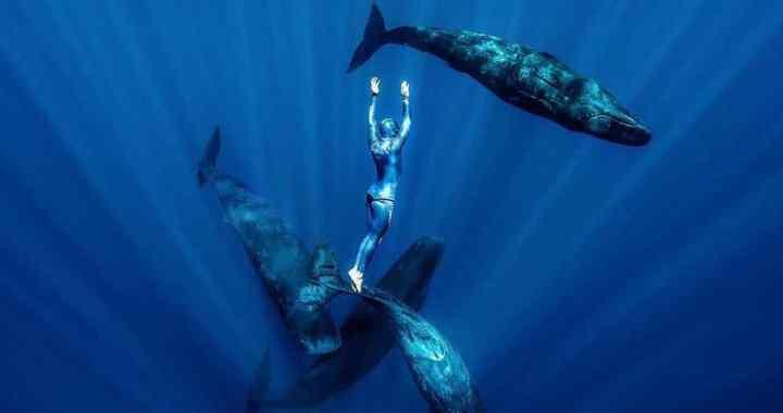 En vidéo – Plongez à la rencontre des cachalots avec Guillaume Néry