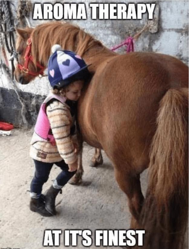 Equestrian horse comedy love