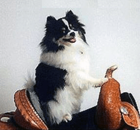 Equestrian horse saddle taz a party pom