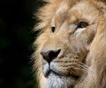 How to Do the Lion Pose