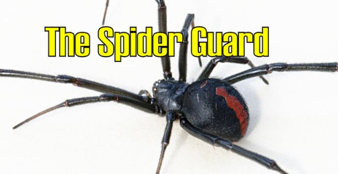 What is the Spider Guard