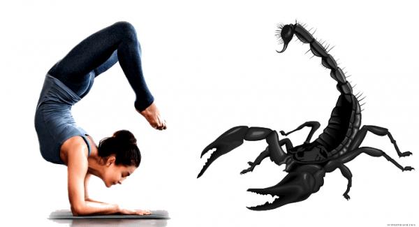 The Scorpion Pose or Vrschikasana in Yoga