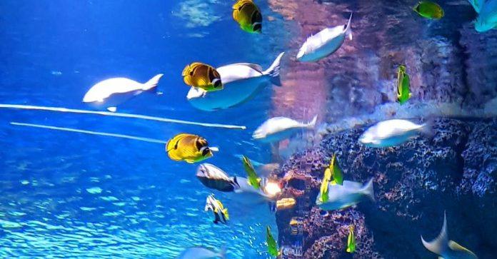 Gadolinium and The Aquarium filtration system