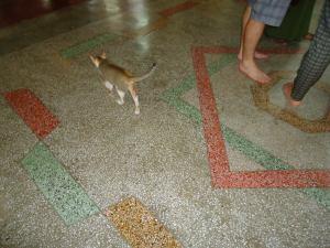 ヤンゴン猫