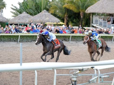 Upstart (left) won the Fountain Of Youth but was determined to have impeded Itsaknockout (right) (Lauren King/Gulfstream Park)