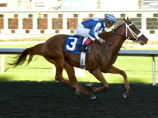 Metaboss was all alone at the finish line to win by 2 1/2 lengths (Shane Micheli/Vassar Photography)