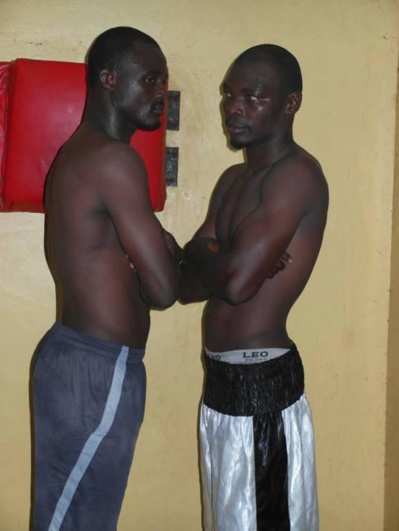 Collins Bio boxers